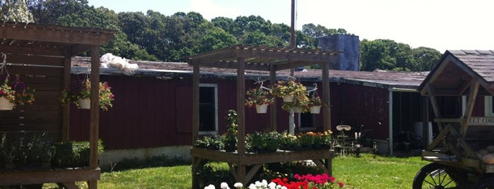 North Sea Farms - Country Farm Stand is one of Enjoy a Hamptons Beach Picnic.