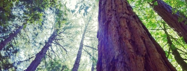 Muir Woods National Monument is one of San Francisco To Do List.