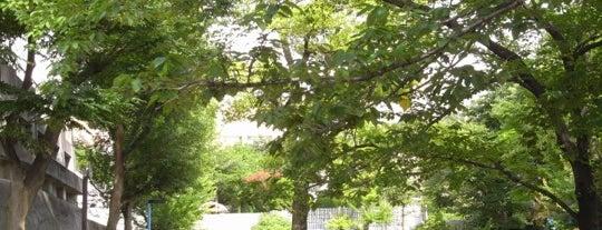 新宿区立 若葉公園 is one of 公園.