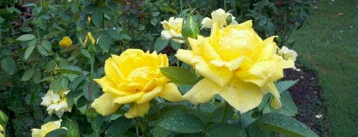 Raleigh Rose Garden is one of Raleigh's Best Parks, Greenways & Gardens.