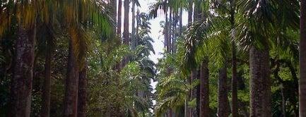 Jardim Botânico do Rio de Janeiro is one of Rio de Janeiro's best places ever #4sqCities.