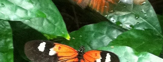 Butterfly House at Faust County Park is one of Best Spots in the St. Louis Metro #visitUS.