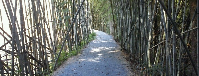 Wilderness Park / Bamboo Forest is one of prattVEGAS faves.
