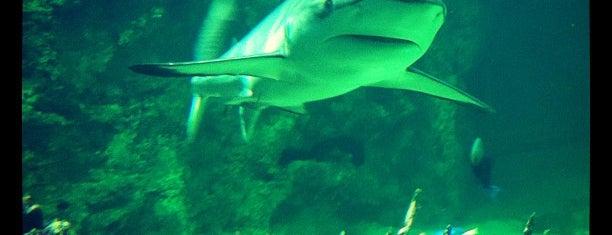 Sydney Aquarium is one of Essential Sydney.