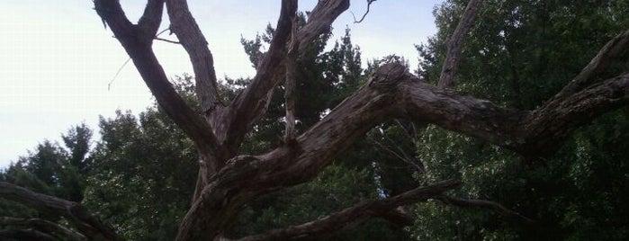 UW Arboretum is one of Fresh Air Around Madison, WI.