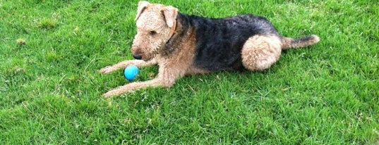 Crissy Field Dog Run is one of A Dog's San Francisco.