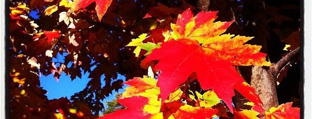 Arnold Arboretum is one of Boston Nature.