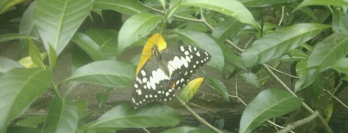 Butterfly Park (Taman Rama-Rama) is one of Sing trip.