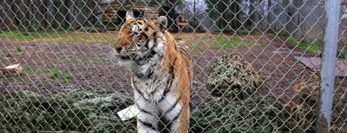 Carolina Tiger Rescue is one of Science, Art & History.