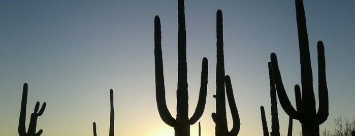 Saguaro National Park is one of All-Time Favourite Places.