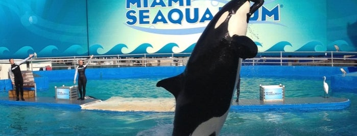 Miami Seaquarium is one of Favorite affordable date spots.