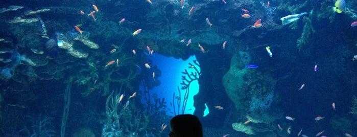 Georgia Aquarium is one of Gary's List.