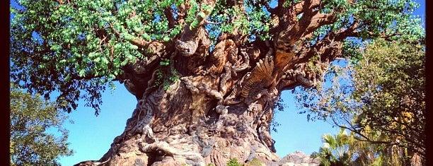 Disney's Animal Kingdom is one of Florida Trip '12.