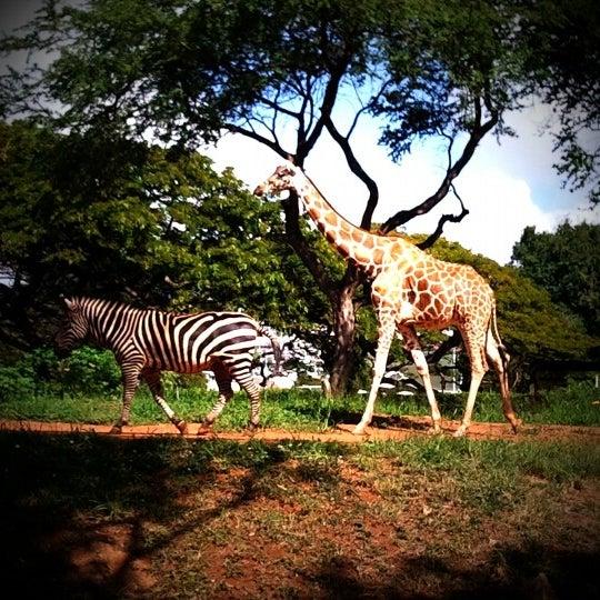 Photo of Honolulu Zoo