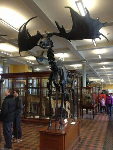 The National Museum of Ireland - Natural History