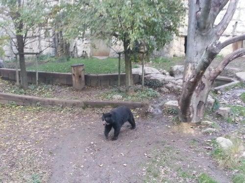Jardin zoologique de la Tête d'Or