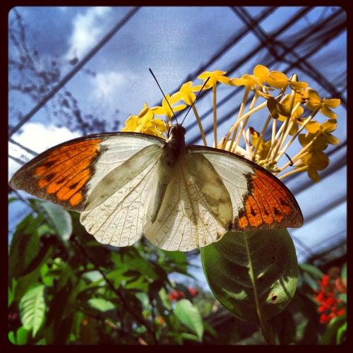 Butterfly Park (Taman Rama-Rama)