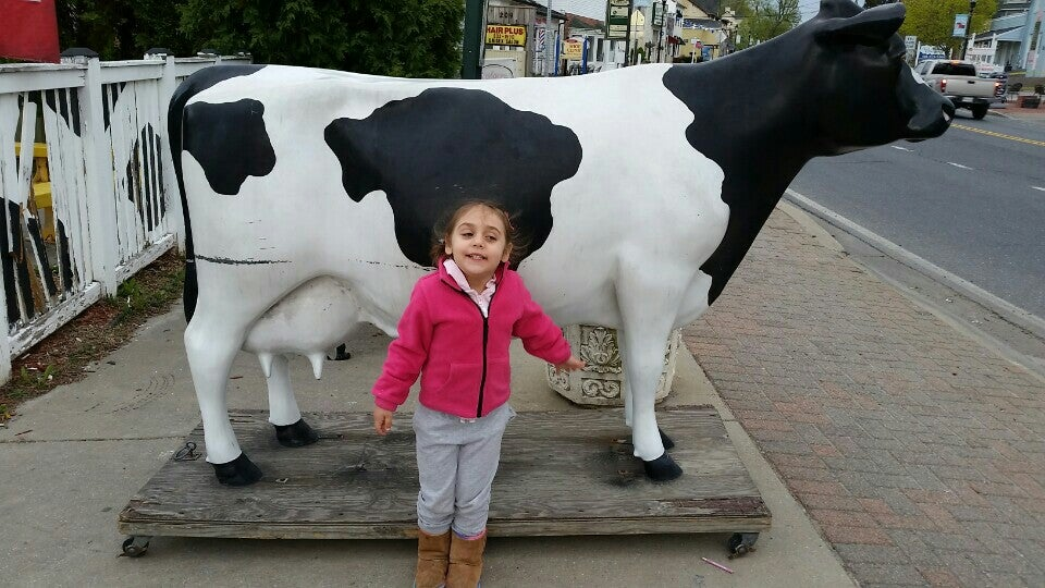 The Cow,cow,frozen yogurt,gelati,ice cream