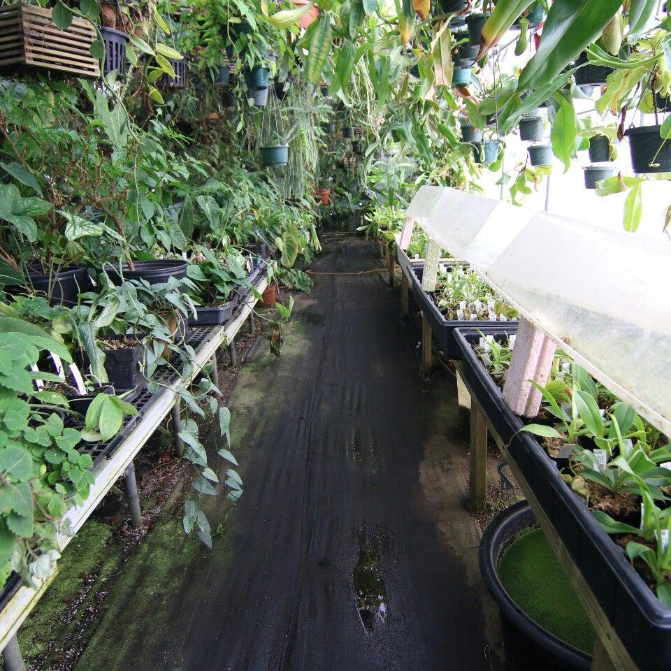 Black Jungle,