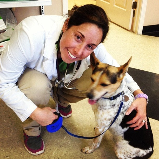CARE ANIMAL HOSPITAL,veterinarian