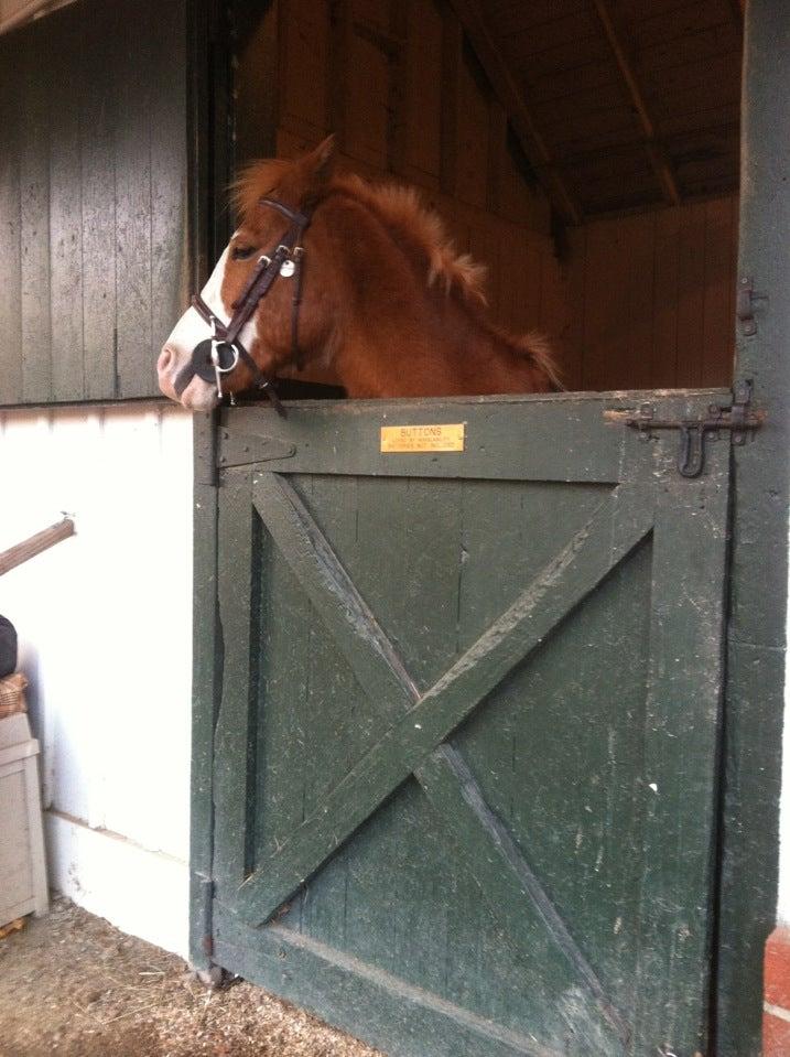Horseability,
