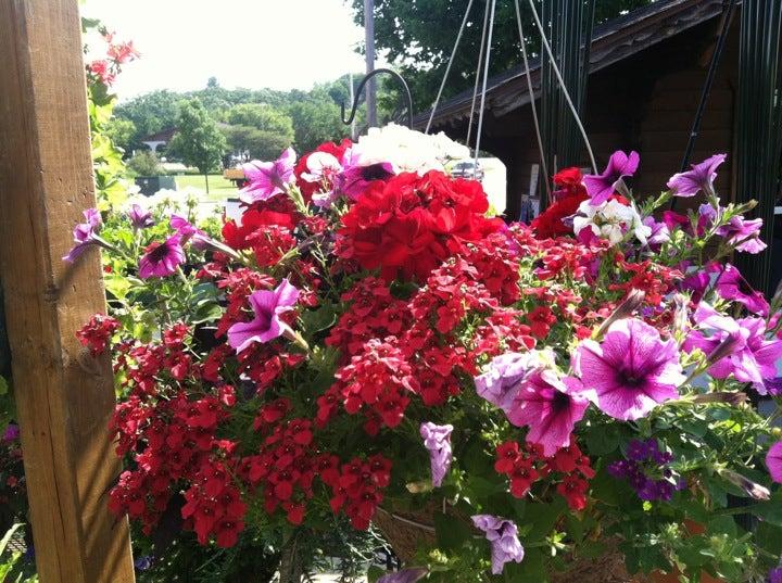 Brenda's Blumenaden,