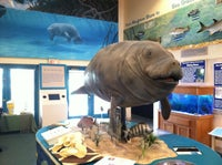 Manatee Observation & Education Center