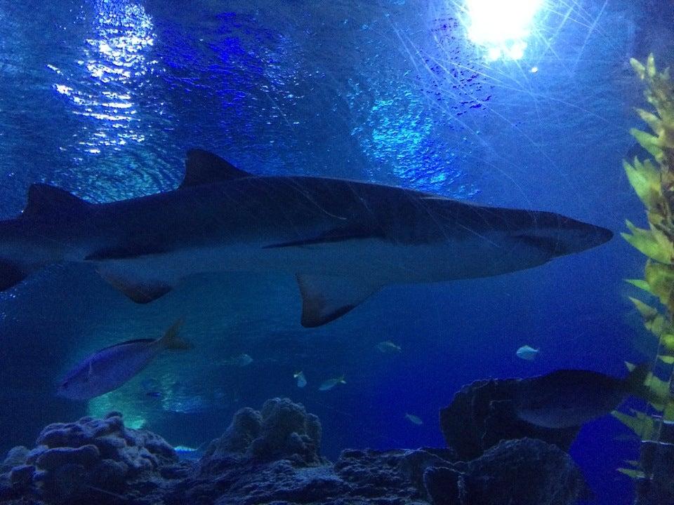Aquaria Klcc Or Aquaria Aquarium Tour
