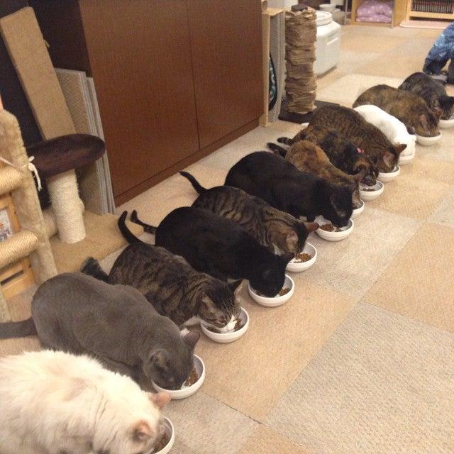 Neko No Mise (Cat's Store)
