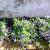 erwin-boers-17228698