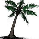 rik-palm-26217465