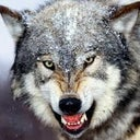 sven-wolf-17935066