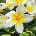 Aloha Kawaa