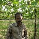 Manish Chauhan