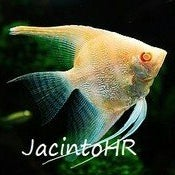 Jacinto HR