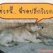 wisit chatthong