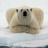 Osita Polar