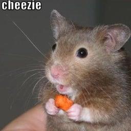 despereaux mouse